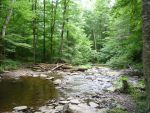 Forest River 6 by raindroppe