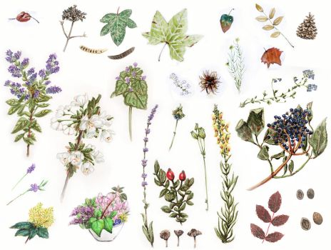 2012 Botanical studies dump by Skogflickan
