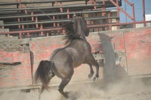 DWP FREE HORSE STOCK 261 by DancesWithPonies