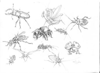 Insectes by Roddar