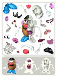 Potato Head Anatomy by freeny