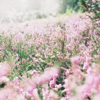 Heather Field II. by kle0012