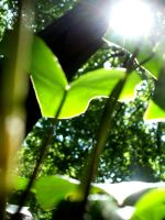 sunshine from the ground by entemin