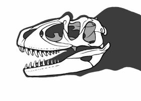 Fake Theropod Skull by dracontes