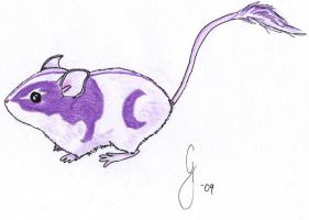 mouse by WildSketcher