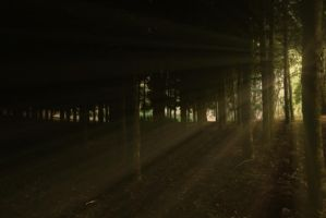 Forest Lights Stock by Moonchilde-Stock