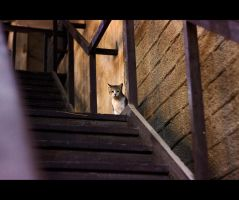 Urban Cats - 59 by MARX77