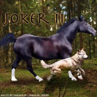 HEE Horse Avatar - [HAP] Joker II by WildWillowHEE