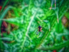 trapped in spider's web by BL00DYSunflowers