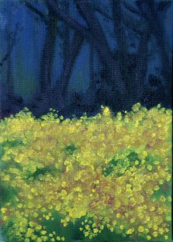 field of yellow weeds by sydneysunray