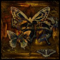 Ab09 Butterfly Collection by Xantipa2