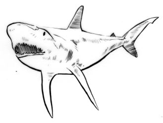 Illustration - Line triptych - Shark by TheLipGlossary