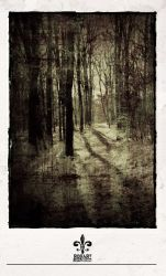 lost in the forrest 03 by rob-art