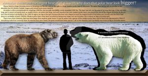 Polar bears are bigger by Dantheman9758