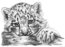 Little snow leopard by Lhori