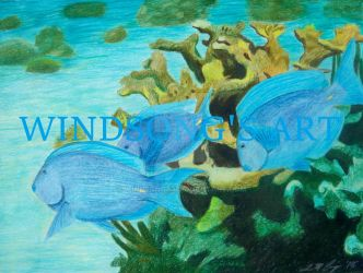 Atlantic Blue Tangs by WindSong83