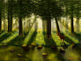 Forest Light by Sillybilly60