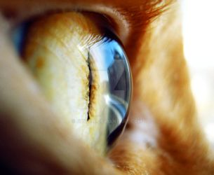 In Your Eyes II. by Saithis