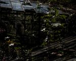 Mysterious Greenhouse - 2 by silentmemoria