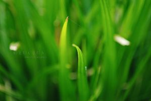 Dreamy grass by LuciusThePope