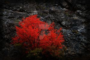 Red Tree and Cliff Autumn by houstonryan