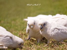 What Is That by FireflyPhotosAust