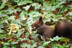 My first squirrel by Adsarta