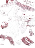 Requested Eagles -pen sketches by staccato