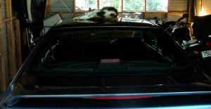 My cat hit your car by Ziblink