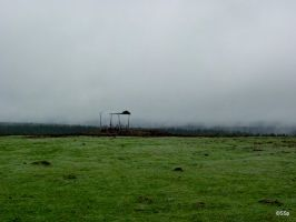 Foggy meadow by Lionpelt-66
