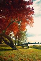 Prelude to Autumn by MyLifeThroughTheLens