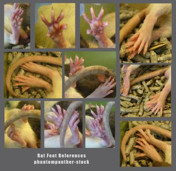 Reference - Rat Feet 01 by phantompanther-stock