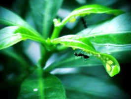 Ant and Leaf by jlgm25