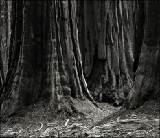 Among the Giant Trees by aponom
