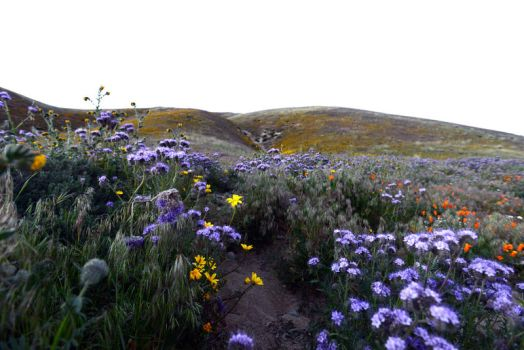 Mountain Meadow Stock 5 by little-spacey