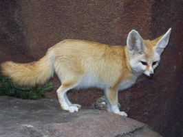 Another Fennec by Lysendriel
