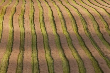 Harvested rapeseed field by Wodger