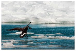 Cold landing by PeterDeBurger