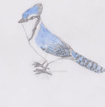 Curious Little Bluejay by DatRandomGirl