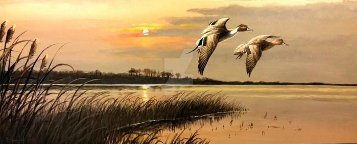 In For The Evening, Pintails by pm3013