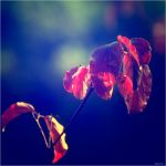 autumn is coming on by Tattoomaus78