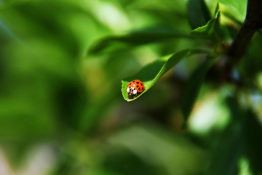 Ladybug Collection XV - On the edge by Rela1985