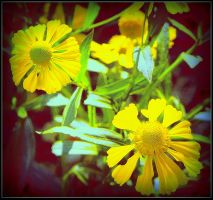 Yellow Flowers by surrealistic-gloom