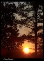 Sunrise Through The Trees by SassyPants61762