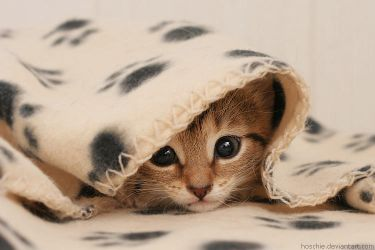 Wrapped in cuteness by hoschie
