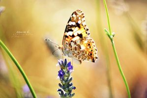butterfly. by kamilla-b