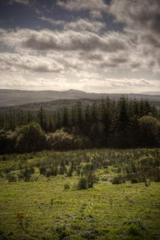 Fermanagh Forest View by finkycake