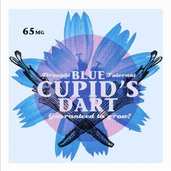 Blue Cupid's Dart by Jippersnappers