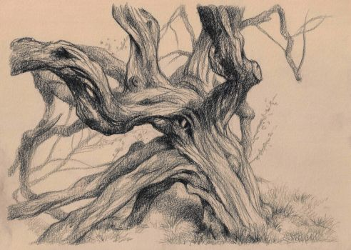 Drawing of a Hawthorn tree by JakobHansson