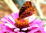 macro butterfly pinkreflection by Rare-Patent